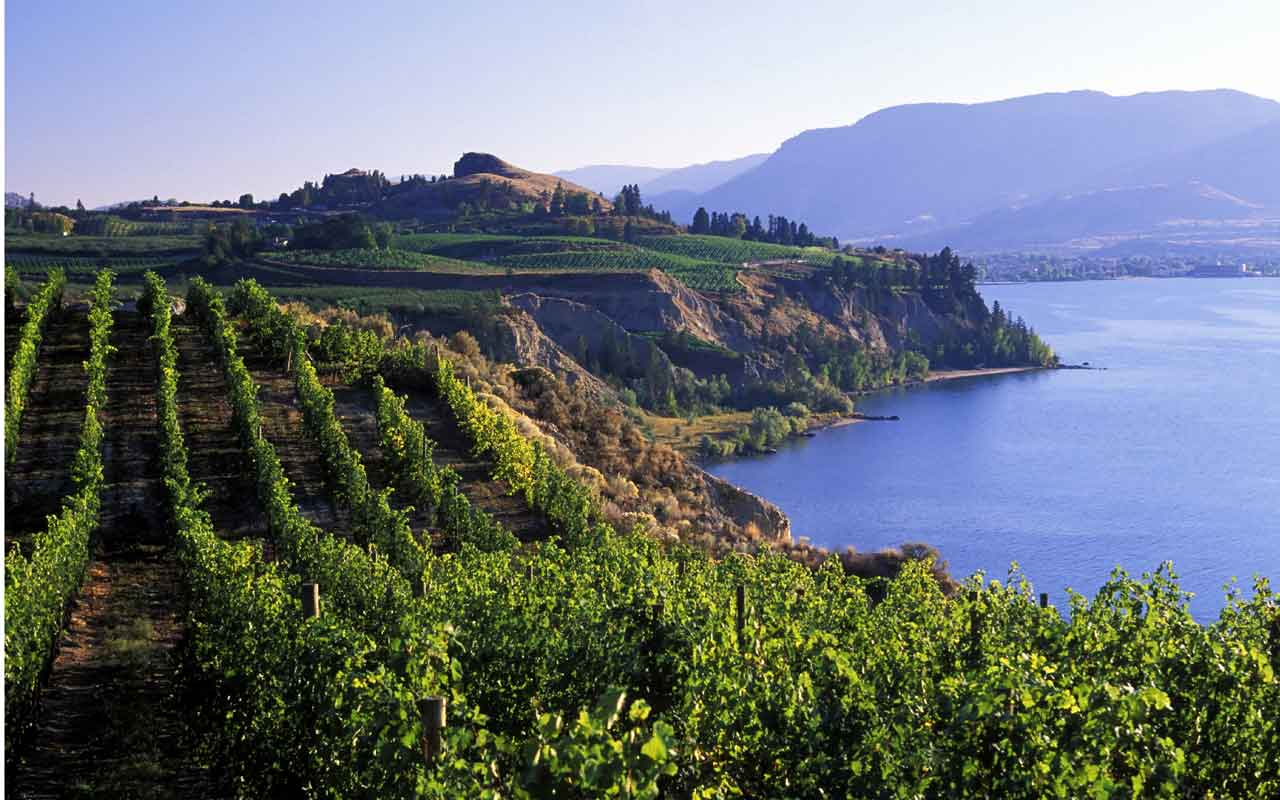 Discover Naramata Wines Winecollective Blog